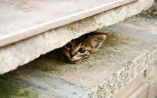 Кот связь потеряна