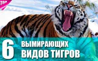 Исчезающие виды тигров