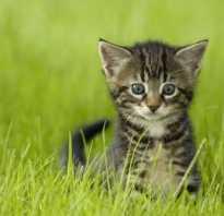 Имена для породистых котят