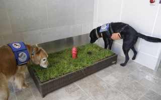 Туалет для собак мелких пород отзывы