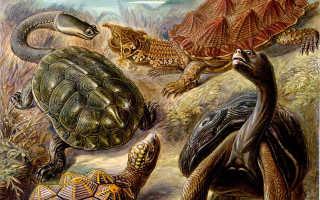 Классификация животных черепаха