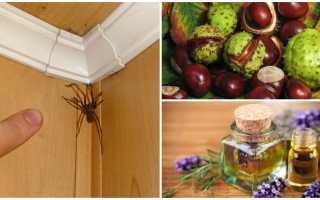 Как вытравить пауков из дома