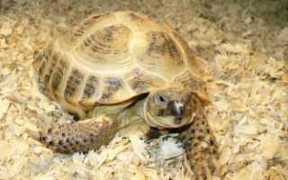 Черепаха точка ru