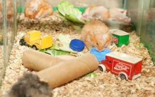 Как сделать игрушки для хомяков