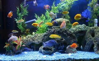 Какие есть рыбки в аквариуме