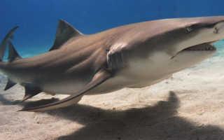 Самые хищные акулы в мире
