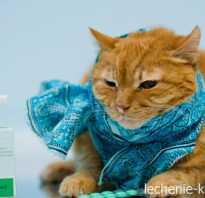 Кот чихает что делать причины