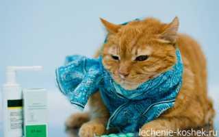 Если кот чихает что делать
