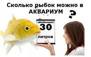 Рыбки для 30 литрового аквариума