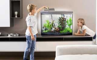 Кормление рыбок в аквариуме видео