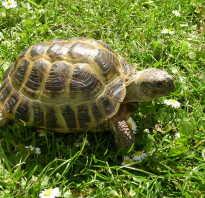 Череп черепахи фото