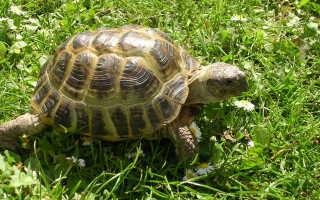 Черепаха фото животного