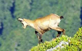 Исчезающие представители животного мира краснодарского края