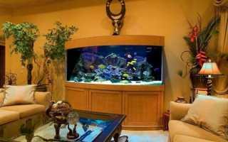 Содержание рыбок в аквариуме