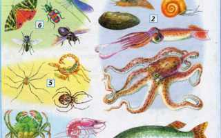 Зеленая книга виды животных