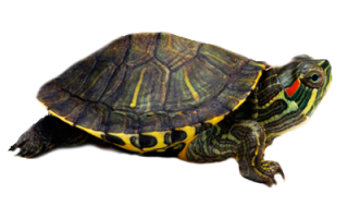 Специалист по рептилиям