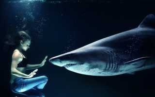 Водятся ли акулы в енисее