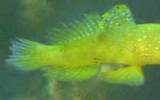 Профилактика болезней аквариумных рыбок