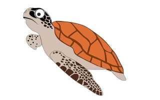 Рассказ о черепах