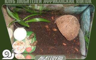 Дом для ахатинской улитки