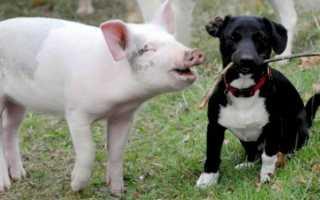 Книга энциклопедия домашних животных