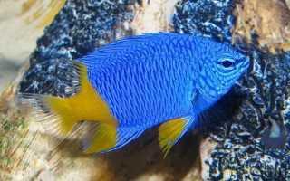 Морские аквариумные рыбки фото с названиями