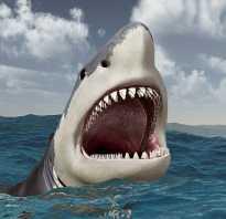 Беременность акулы длится 4 года