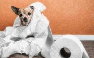Собака ходит в туалет жидким стулом