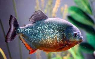 Фото хищных рыб