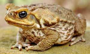 Сообщение чем отличаются лягушки от жабы