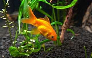 Аквариумные рыбки едят растения