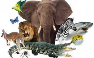 Исчезнувшие животные 3 класс окружающий мир