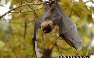 Биология летучих мышей