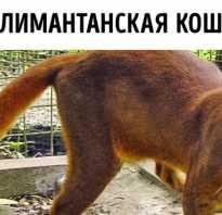 Виды диких котов