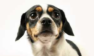 Успокоительные капли для собак