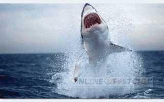 Может ли дельфин убить акулу