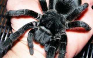 Укус паука домашнего симптомы
