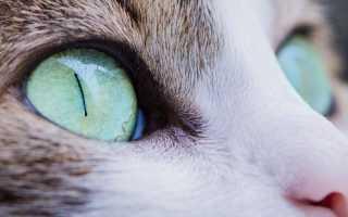 Как видят кошки наш мир