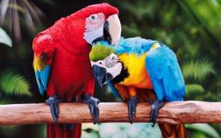 Уход за попугайчиками в домашних условиях